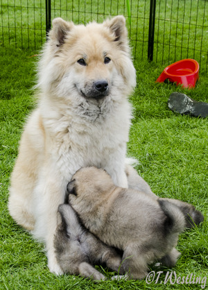 Nellie med sina bebisar