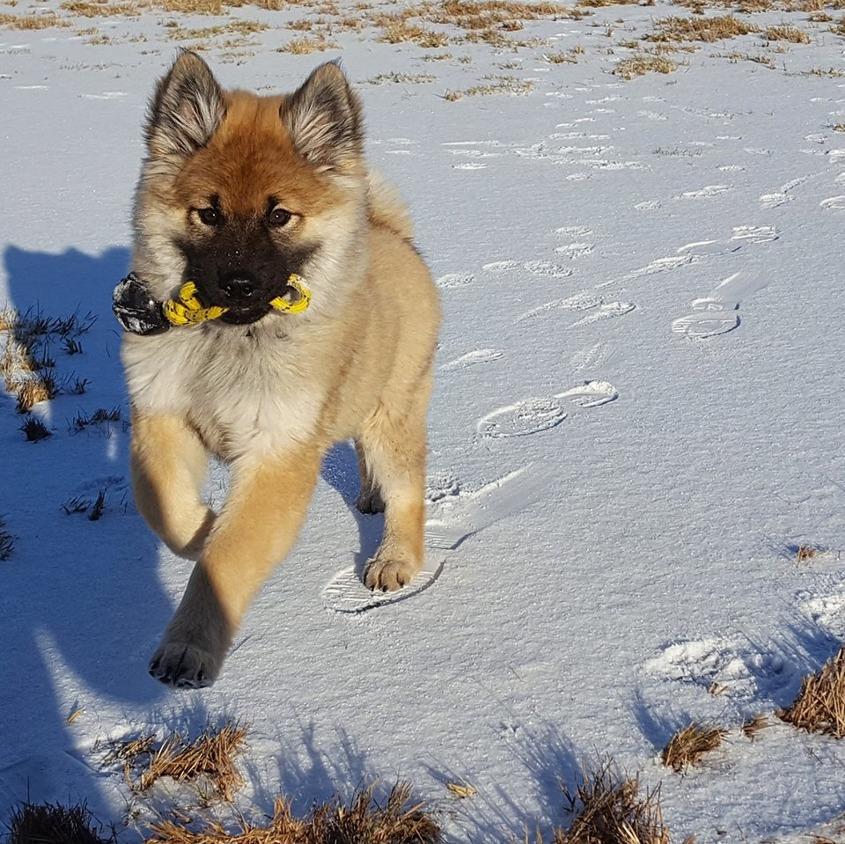 """Bajen """"Hakko"""" springer (matte Fanny som tagit bilden)"""