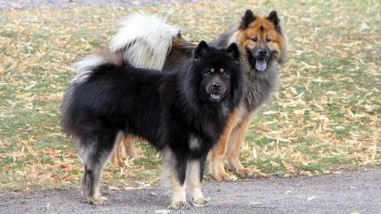 Urax (den svarta) och Leo är den andra fina hanen dem har.