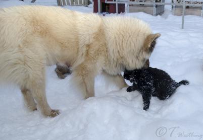 Första gången ute i snön, 20 februari.