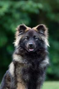 Pappa Biggie som unghund, bild tagen av Jennifer Andersson