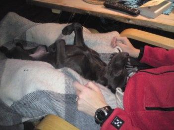 Vänj hunden tidigt att du pysslar och kollar tassar mm...