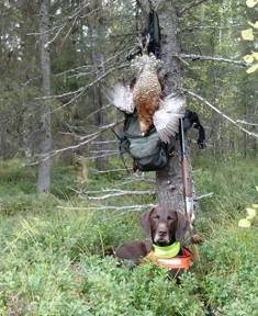 Jagr i tjäderskogen