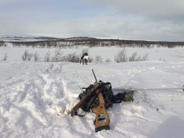 Jagr hämtar in en av dagens fjällripor...