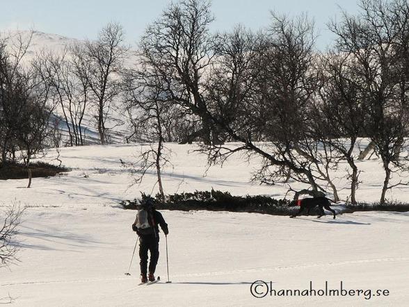Peter på väg att avancera Jagr.  Foto: Hanna Holmberg,