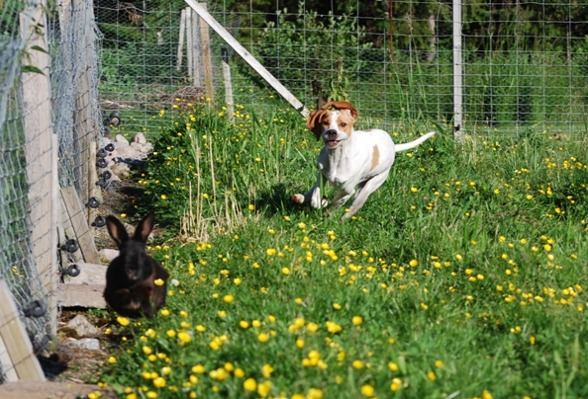En lydig hund är en lycklig hund...