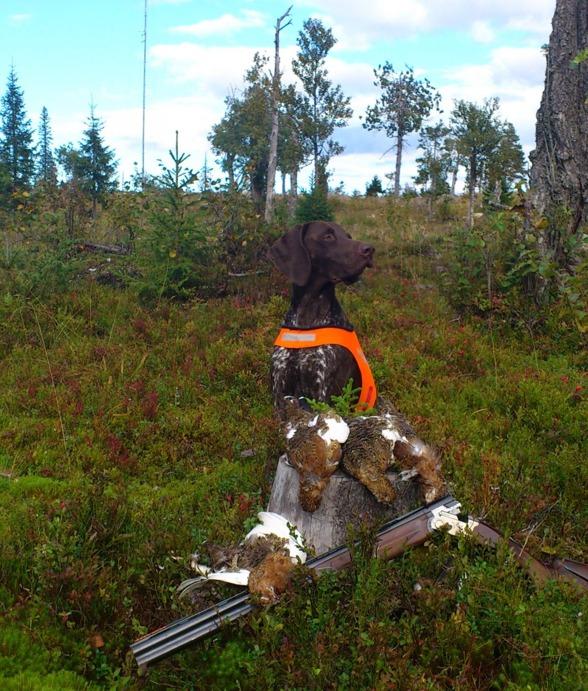 Lynx efter en bra stund i skogen...