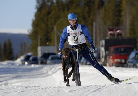 Jagr och Jaana i bra fart...  Foto: Ulf Mårtensson,  www.only4dogs.se