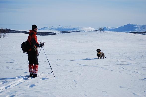 Vinterjakt med hund är underkattat...