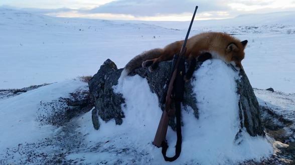 ..ta chansen att öka tillgången på småvilt - jaga mer räv!