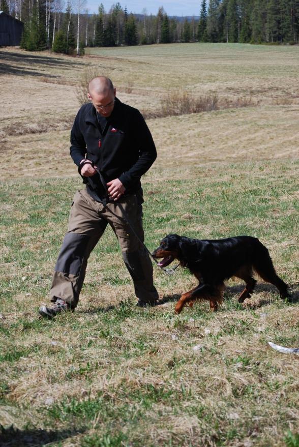 Här har vi en hund som förstått hur man går i koppel. Bra jobbat Fredde!