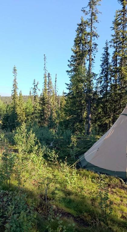 1 sep - Tältläger i storskogen