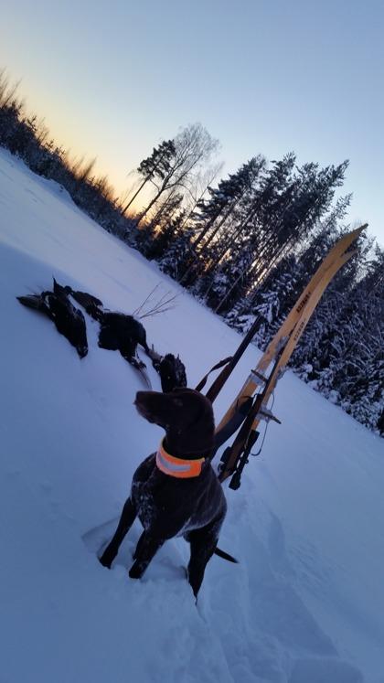 Jagr fixar nergrävda orrar