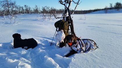 korta korta fkapauser och jaktdagar i mitten av februari