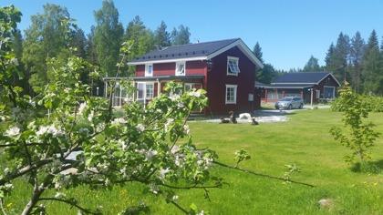 Äppelträden blommade sent 2015