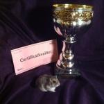 VintervitSM-Vinnare Mapilamis Leroyne