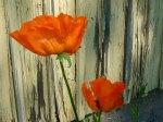 Blommor i Nakkila /Manja Lehto