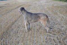 Världens snällaste hund Daggan!!