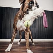 Rädda/osäkra hundar