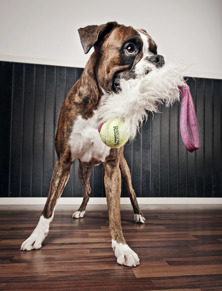 Rädda/osäkra hundar - Start 4/10 Marina J