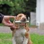 Valpkurs/unghundskurs för tävlingslydnadshunden steg 1 - Valplyd 9/4