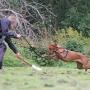 Valpkurs/unghundskurs för tävlingshunden steg 1