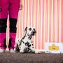 Inspirationskurs–prova på olika hundsporter