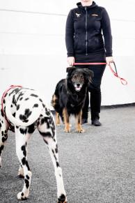 Hundmöteskurs - Intensiv - Hundmöteskurs Intensiv