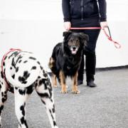 Reaktiva hundar heldag