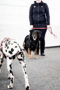 Reaktiva hundar heldag - Reaktiva hundar heldag m hund