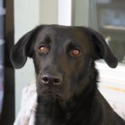 Föreläsning: Ångest hos hund