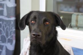 Föreläsning: Ångest hos hund: separationsångest, bilåkarångest med mera - [Föreläsning. Ångest hos hund