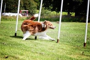 Agility Handling unghund - klass 1 - Agility Handling unghund - klass 1