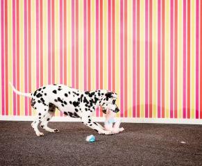 Heldag Beteendeproblem hos hund - Heldag Beteendeproblem hos hund
