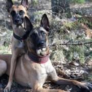 Föreläsning Samspel mellan hundar