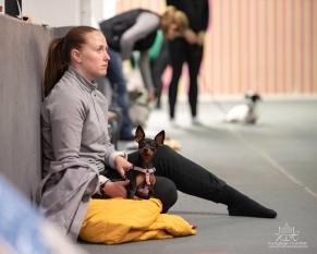 Tematräning - Tema Hundmöte