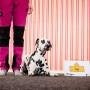 Så mycket mera-kurs för tävlingshunden! - Så mycket mera-kurs för tävlingshunden med start 2/4