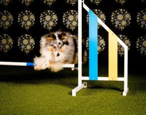 Så mycket mera-kurs för tävlingshunden! - Så mycket mera-kurs för tävlingshunden med start 19/2