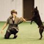 Så mycket mera-kurs för tävlingshunden!