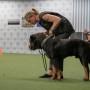 Frivillig hantering - Start och Stoppsignal - Frivillig hantering - Start och Stoppsignal m hund