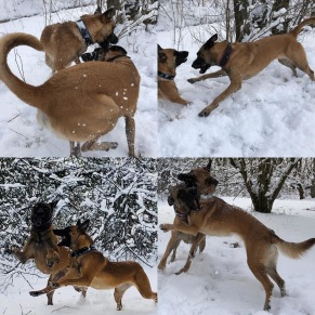 Föreläsning: Hundars lek - ur olika synvinklar - Föreläsning: Hundars lek