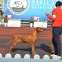 Föreläsning-Hundutställning med sikte på Best In Show