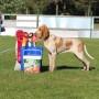 Clinic-Hundutställning med sikte på Best in Show