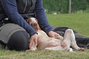 Parkeringsträning Online - Parkeringsträning Online med hund