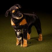 Boosta självförtroendet - superhjältekurs som passar de flesta hundar