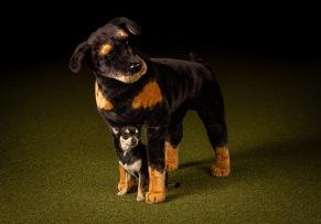 Boosta självförtroendet - superhjältekurs som passar de flesta hundar - Boosta självförtroendet 13/1