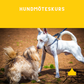 Hundmöteskurs - Hundmöteskurs i Slottskogen 20/5