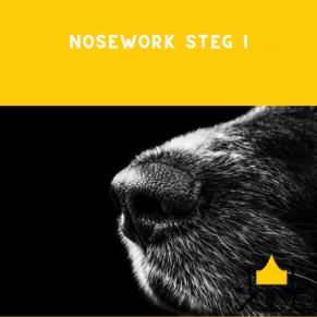Nosework steg 1 - Nosework steg 1 24/5 kl
