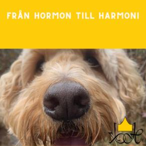 Från Hormon till Harmoni - Från Hormon till Harmoni 18/5