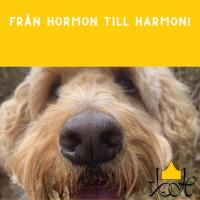 Från Hormon till Harmoni